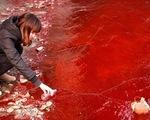 Ngày môi trường thế giới, xót xa nhìn mẹ thiên nhiên ngộp trong ô nhiễm