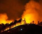Đốt rác gây cháy rừng Hà Tĩnh, một người dân bị phạt 7 năm tù