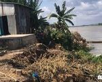 Sạt lở ăn sâu vào bờ ở An Giang, di dời khẩn 27 hộ dân