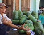 Mỗi trái bí khổng lồ nặng... 50 kí, mỗi ngày bí lớn thêm.. 1 kí