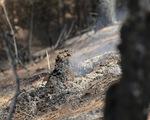 Cận cảnh rừng Hà Tĩnh tan hoang sau 3 ngày đêm cháy như biển lửa