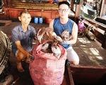 Không xuất được mực khô sang Trung Quốc, tỉnh Quảng Nam
