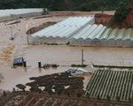 Đà Lạt, Lâm Đồng mưa nhỏ lũ sâu, vì đâu nên nỗi?