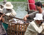 Người nuôi cá tra cũng hóng tỉ giá và thương chiến Mỹ - Trung