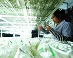 Vô tư xài giống lậu, hoa Đà Lạt khó xuất khẩu