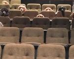Chó được huấn luyện xem nhạc kịch