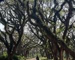Khu rừng kỳ ảo ở miền