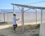 Xin làm nông nghiệp, làm luôn điện mặt trời