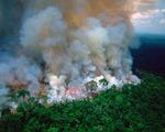 Cháy rừng Amazon: Nguyên thủ, diễn viên, ca sĩ cũng 'share' nhầm ảnh