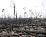 Cháy rừng Amazon hâm nóng G7 ở Pháp