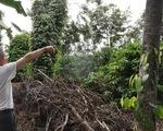 Cựu binh trồng cà phê nuôi gia đình dưới góc nhìn của người nước ngoài