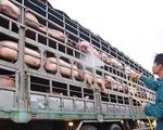 CPI tăng nhẹ 0,28%, vẫn lo dịch tả làm tăng giá thịt lợn