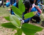Sinh viên quốc tế trồng 500 cây xanh ở quần thể Angkor
