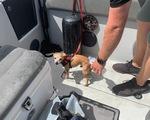 Chú chó tội nghiệp được cứu sống và đặt tên siêu bão Dorian