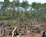 Khởi tố nguyên trưởng ban quản lý rừng vì để đơn vị quân đội phá gần 600ha