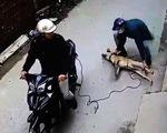 Bà con xứ Thanh ngẩn ngơ khi chỉ 1 đêm, 40 con chó bị