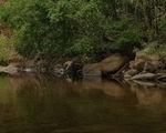 10 bạn trẻ rủ nhau vô rừng sâu Hồ Tiên chơi, 1 người chết, 1 mất tích