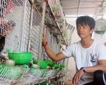 Cho chim nghe nhạc đẻ trứng rất sai, thu nhập 20 triệu đồng/tháng