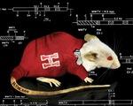 Vì sao chuột trở thành