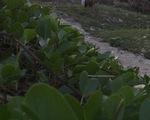 9 công nhân ngộ độc do ăn nhiều rau muống biển