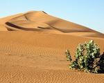 """Kỳ lạ khi phát hiện có 1,8 tỉ cây xanh ở """"vùng đất chết"""" Sahara"""