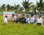 Không phát triển nông nghiệp hữu cơ ồ ạt