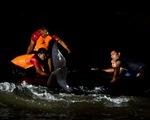 Giải cứu hơn 100 con cá voi mắc cạn ở bờ biển Sri Lanka