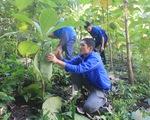 'Rừng thanh niên' phủ xanh biên giới