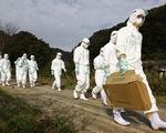 Cúm gia cầm đe dọa Nhật, Hàn bị dạng cúm độc lực cao