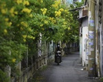 Tiết trời se lạnh, đường phố Sài Gòn rộ sắc hoa