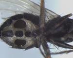 Đan Mạch phát hiện loài nấm ăn thịt biến ruồi thành