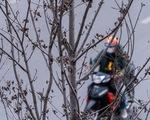 Hàng cây phong lá đỏ chết khô ở tuyến đường được kỳ vọng lãng mạn nhất Hà Nội