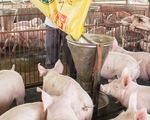 Doanh nghiệp nước ngoài chiếm 65% thị phần thị trường thức ăn chăn nuôi