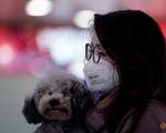 Hong Kong cách ly chó cưng của bệnh nhân nhiễm corona