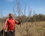 Ninh Thuận: lửa cháy hoa màu, cây cối chết khô
