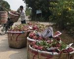 Công ty Trung Quốc đặt 500 container thanh long 50.000 đồng/kg, nay hủy hoặc chỉ trả 5.000 đồng