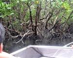 Tạm ngưng tham quan di tích, du lịch sinh thái ở Côn Đảo