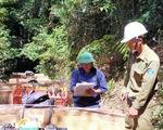 Bắt 13 người vụ phá rừng quy mô lớn tại Kon Tum