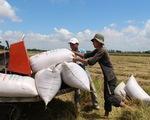 Tạm ngưng ký hợp đồng xuất khẩu gạo mới, hợp đồng đã ký sẽ xem xét cụ thể