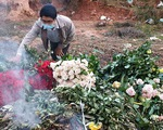 Dân trồng hoa Đà Lạt mời mọi người... cắt miễn phí
