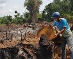 """""""Rừng giáp ranh Gia Lai - Đắk Lắk đang bị tàn sát"""": Gia Lai chỉ đạo báo cáo khẩn"""