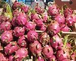 Thanh long, chanh leo Việt Nam có cơ hội xâm nhập thị trường xuất khẩu mới