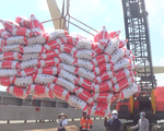 Tín hiệu vui  từ hạt gạo Việt