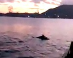 Đàn cá heo 'nhảy múa