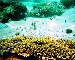 Hè đến rồi, lặn biển ngắm san hô nào!