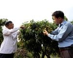 Bộ Nông nghiệp họp trực tuyến với Nhật để thúc đẩy xuất khẩu vải thiều