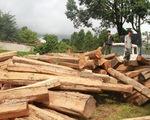 5 xe gỗ lậu