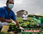 COVID-19 khiến người Ý quay lại công việc nhà nông
