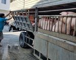 Giá thịt heo trong nước không xuống, từ ngày mai 12-6, nhập heo sống Thái Lan