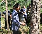 Đầu độc 10ha rừng thông, 7